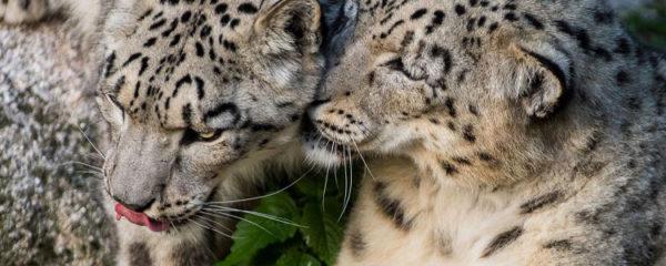 protéger les espèces menacées